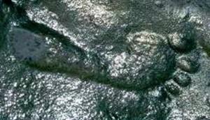 Impronta umana fossile