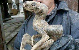 Animale mummificato Siberia