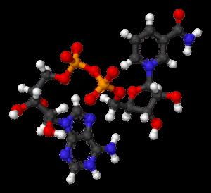 NAD molecola